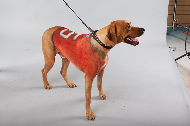 Pet Paint Sports Dog