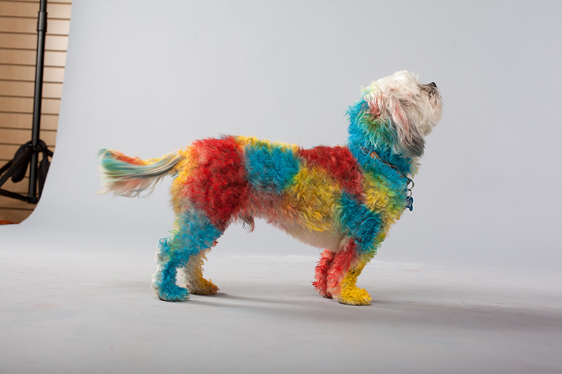 Pet Paint Rainbow Dog