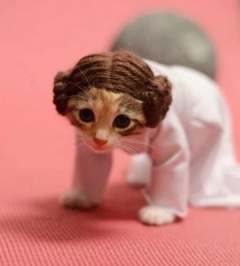 A sheet of white cloth and some knitting skills can net you an awesome Princess Leia costume for your pet! Just be careful that your cat doesnu0027t run away ... & Top 5 DIY Pet Costume Ideas For Halloween!
