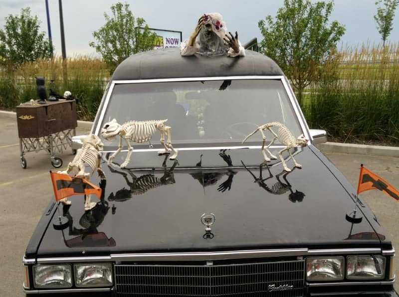 Cat and Dog Skeletons