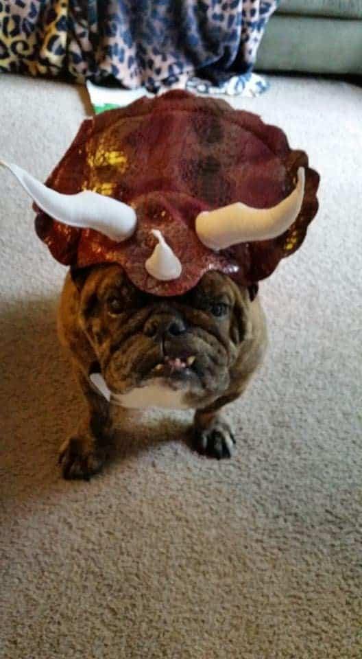 Dino Dog Costume