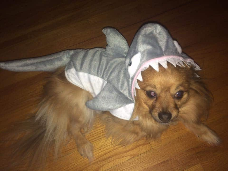 Halloween Dog Costume Shark
