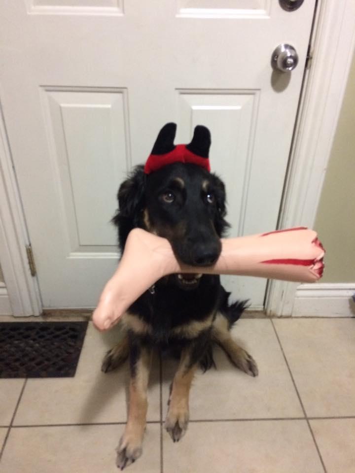 Halloween Dog Costume 4