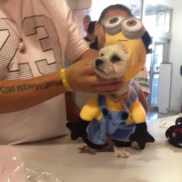 Minion Little Dog Costume