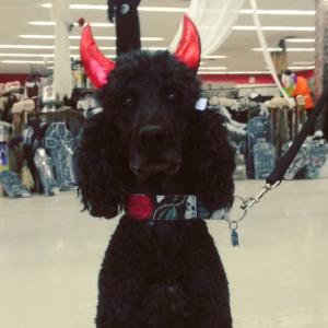 Devil Horns Dog Halloween