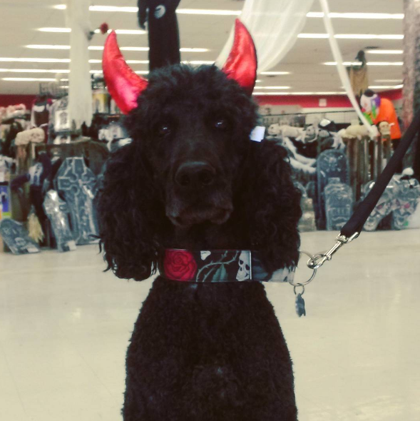 Devil Horns Dog Halloween