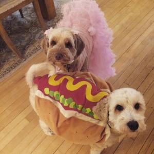 Halloween Tutu For Dogs