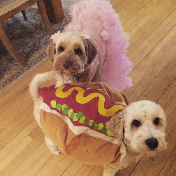 Halloween Tutu For Dogs
