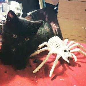 Halloween Black Cat Costume Decoration