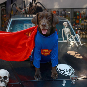 Halloween Super Man Costume For Dogs