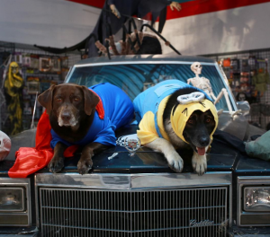 Halloween Minion Dog and Super Dog