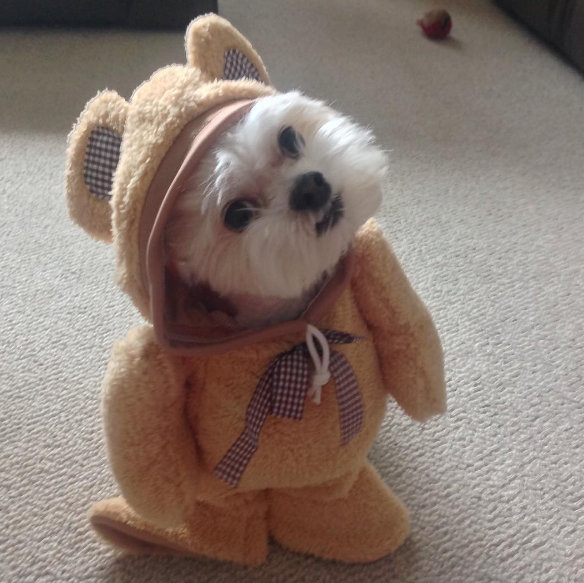 Halloween Teddy Bear Costume For Dogs