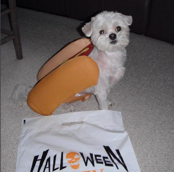 halloween alley pet costumes