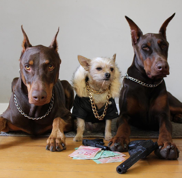 Halloween Dog Gangster Costume
