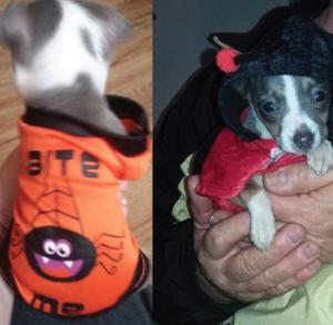 Puppy costume halloween