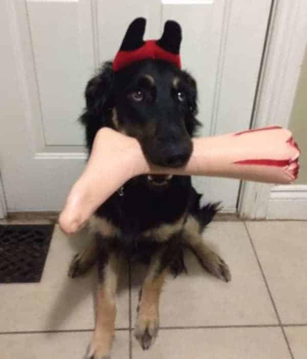 halloween-pet-costumes