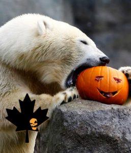 Manitoba Bears